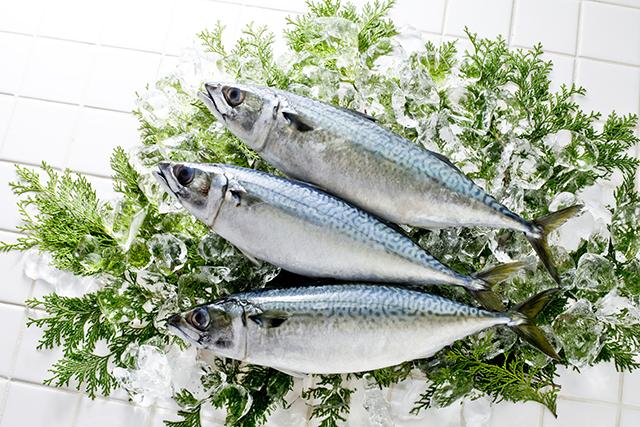 DHAの含まれる青魚