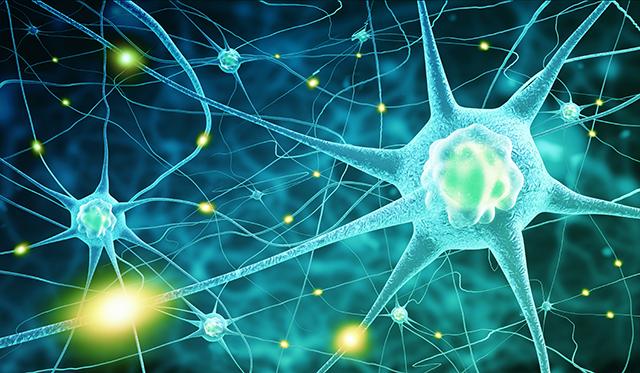 食べ物で脳・神経を活性化
